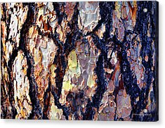 This Old Skin Acrylic Print by Donna Blackhall