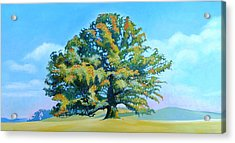 Thomas Jefferson's White Oak Tree On The Way To James Madison's For Afternoon Tea Acrylic Print by Catherine Twomey