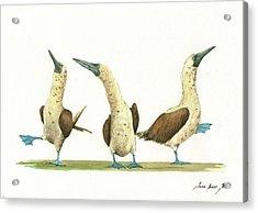 Three Blue Footed Boobies Acrylic Print by Juan Bosco
