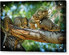 Three Is A Crowd  Acrylic Print by Robert Bales