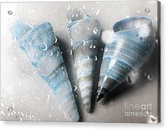 Three Little Trumpet Snail Shells Over Gray Acrylic Print by Jorgo Photography - Wall Art Gallery