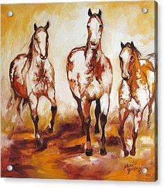 Three Pinto Indian Ponies Acrylic Print by Marcia Baldwin