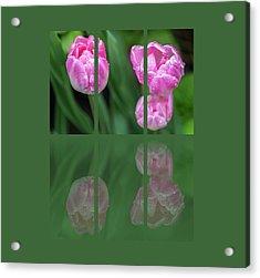 Three Tulip Triptych Acrylic Print by Martina Fagan