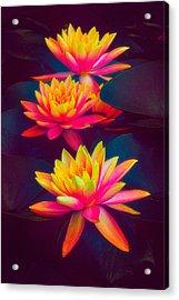 Three Waterlilies Acrylic Print by Chris Lord