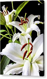 Three White Lilies Acrylic Print by Garry Gay