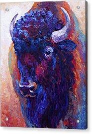 Thunder Horse Acrylic Print by Marion Rose