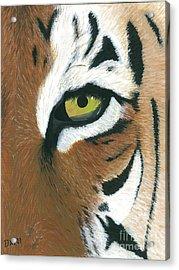 Tiger Acrylic Print by Dani Moore