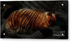 Tiger Dreams Acrylic Print by Kathi Shotwell