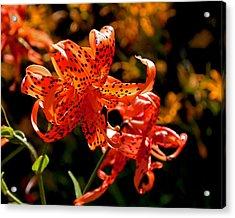 Tiger Lilies Acrylic Print by Rona Black