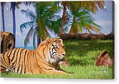 Tiger Under The Palms Acrylic Print by Judy Kay