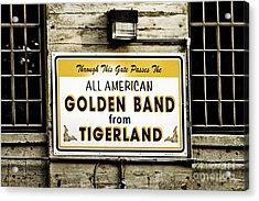 Tigerland Band Acrylic Print by Scott Pellegrin