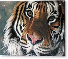 Tigger Acrylic Print by Barbara Keith