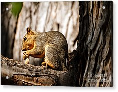 Time For A Peanut Acrylic Print by Robert Bales