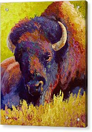 Timeless Spirit - Bison Acrylic Print by Marion Rose