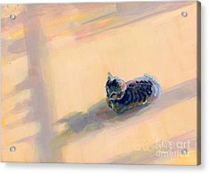 Tiny Kitten Big Dreams Acrylic Print by Kimberly Santini