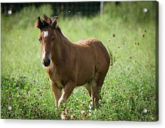 Tiptoe Through The Clover With Me Acrylic Print by Laurie Comfort