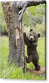 Too Cute For Words Acrylic Print by Melody Watson
