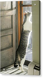 Top Cat Acrylic Print by Diana Angstadt