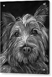 Tosha The Highland Terrier Acrylic Print by Enzie Shahmiri