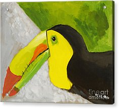 Toucan Acrylic Print by Katie OBrien - Printscapes
