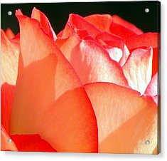 Touch Of Rose Acrylic Print by Karen Wiles
