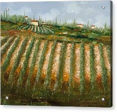 Tra I Filari Nella Vigna Acrylic Print by Guido Borelli