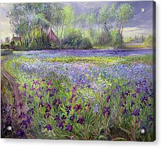 Trackway Past The Iris Field Acrylic Print by Timothy Easton