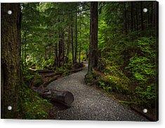 Trail Around Ward Lake Ketchikan Alaska Acrylic Print by Michael J Bauer