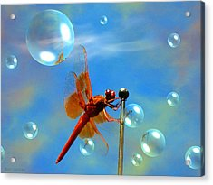 Transparent Red Dragonfly Acrylic Print by Joyce Dickens