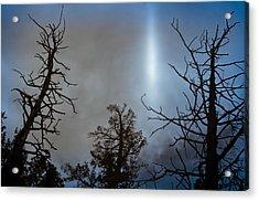 Tree Flash Acrylic Print by Scott Sawyer
