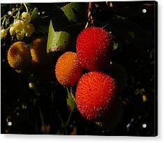 Tree Fruit Acrylic Print by Terry Perham