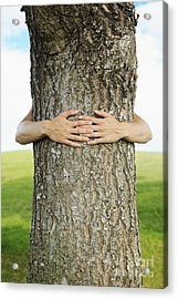 Tree Hugger 1 Acrylic Print by Brandon Tabiolo - Printscapes