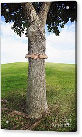 Tree Hugger 3 Acrylic Print by Brandon Tabiolo - Printscapes