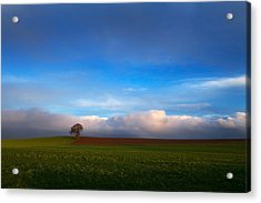Tree In Arable Farmland Near Carlow Acrylic Print by Panoramic Images