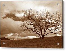 Tree In Storm Acrylic Print by Kathy Yates