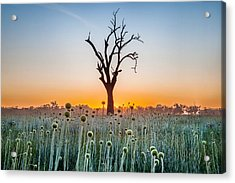 Family Tree Acrylic Print by Az Jackson