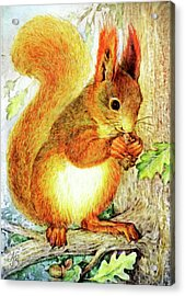 Tree Squirrel Acrylic Print by Natalie Berman