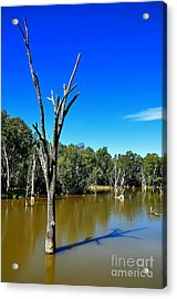 Tree Stumps In Beauty Acrylic Print by Kaye Menner