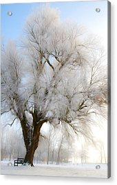 Tree Acrylic Print by Svetlana Sewell