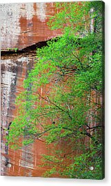 Tree With Red Canyon Wall Acrylic Print by Joseph Smith