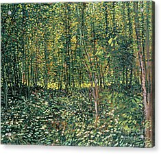 Trees And Undergrowth Acrylic Print by Vincent Van Gogh