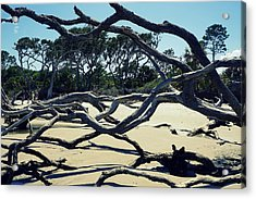 Trees On Jekyll Island Acrylic Print by Laurie Perry