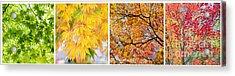 Treetastic Acrylic Print by Tim Gainey
