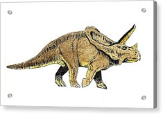 Triceratops Acrylic Print by Michael Vigliotti