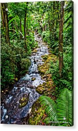 Tropical Forest Stream Acrylic Print by Christopher Holmes