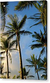 Tropical Palm Trees Of Maui Hawaii Acrylic Print by Pierre Leclerc Photography