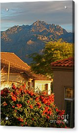 Tucson Beauty Acrylic Print by Nadine Rippelmeyer