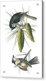 Tufted Titmoust Acrylic Print by John James Audubon