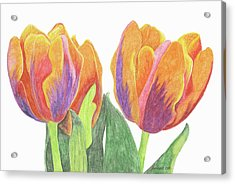 Tulips In Bloom Acrylic Print by Laurie With