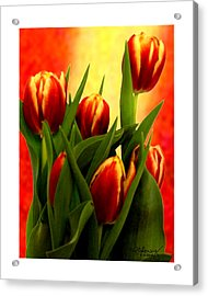 Tulips Jgibney Signature  5-2-2010 Greenville Sc The Museum Zazzle For Faa20c Acrylic Print by jGibney The MUSEUM Zazzle Gifts